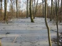 Bevroren bos bij Aarhus